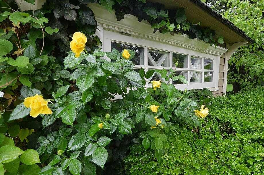Hour Photo/Alex von Kleydorff Rosebrook Gardens, part of the Hidden Garden Tour