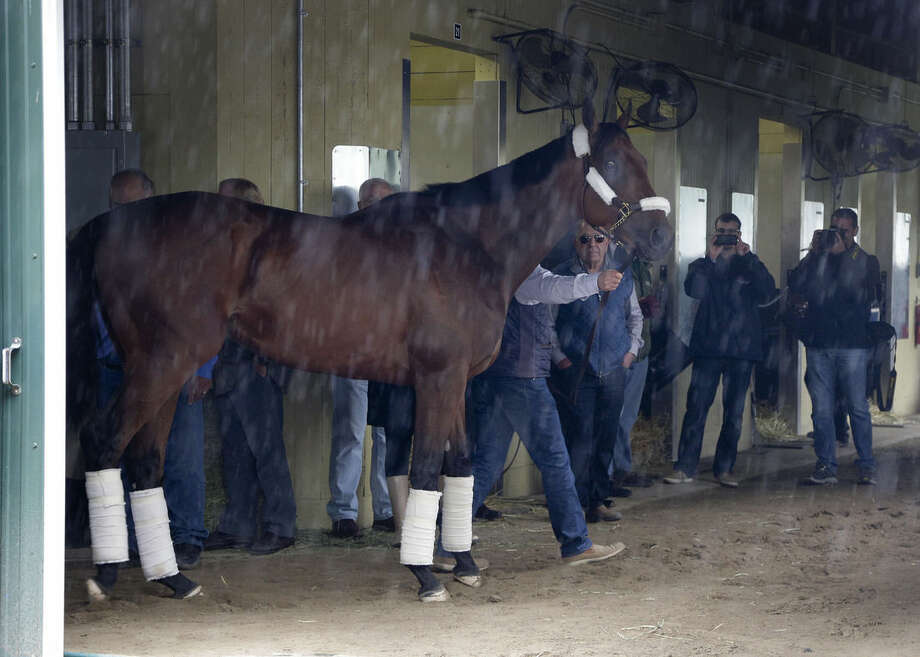 Kentucky Derby and Preakness Stakes winner American Pharoah pauses as he is led around the barn by trainer Bob Baffert after arriving at Belmont Park, Tuesday, June 2, 2015, in Elmont, N.Y. American Pharoah will try for the Triple Crown on Saturday, June 6, in the 147th running of the Belmont Stakes horse race. (AP Photo/Julie Jacobson)