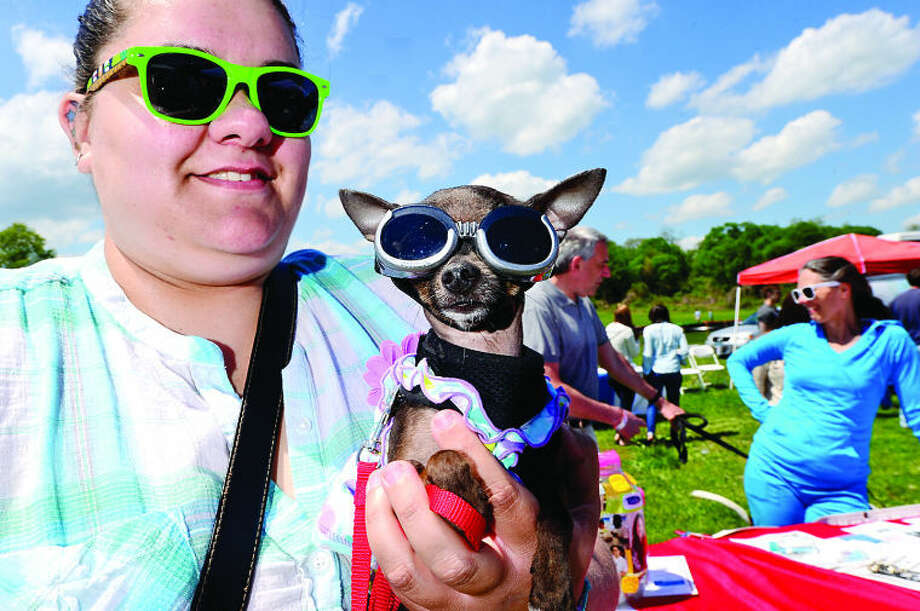 Hour photo / Erik Trautmann Alex Luis' teacup chihuahua Cookie won the Cutest Dog first prize during The Hour Parade of Pets Pet Expo Saturday at Taylor Farm Park.