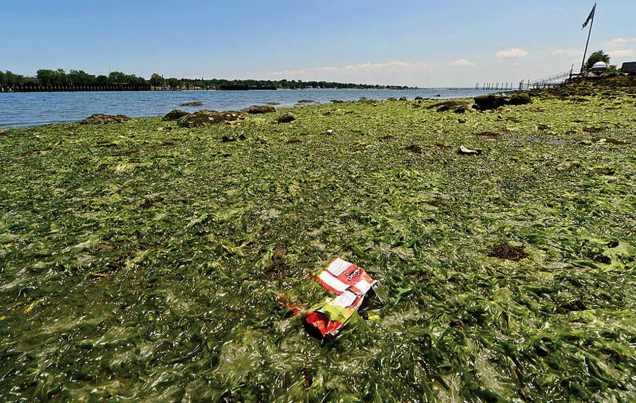 The western shore of the west branch of Stamford Harbor. The Stamford Harbor Management has requested $100,000 from the city to buy a specialized boat to clean up the garbage that flow inland from the harbor and the branches.