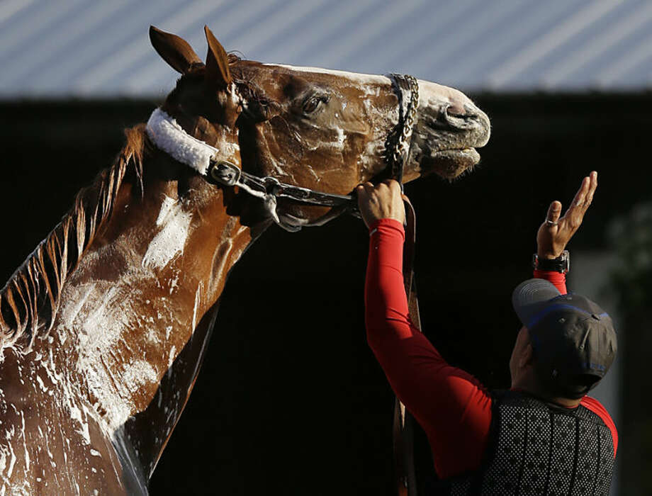 California Chrome is bathed after jogging around the track at Belmont Park in Elmont, N.Y., Wednesday, May 21, 2014. California Chrome arrived in New York on Tuesday to begin preparations for his bid to become horse racing's first Triple Crown winner in 36 years. (AP Photo/Seth Wenig)