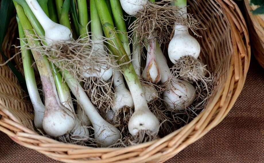 Hour Photo/Alex von Kleydorff Fresh Garlic Bulbs at Wilton's Farmers Market