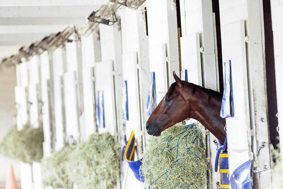 Triple Crown winner American Pharoah rests in his stall after returning to Churchill Downs on Sunday, June 7, 2015, in Louisville, Ky. American Pharoah won the Belmont Stakes in New York Saturday to capture Horse Racing's Triple Crown. (AP Photo/David Stephenson)