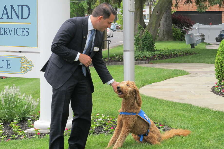 Matthew Fiorillo, owner of the Ballard-Durand funeral home in White Plains, N.Y., plays with his dog Lulu on the funeral home's lawn on Thursday, June 4, 2015. Lulu, a goldendoodle, is one of an increasing number of dogs used in funeral homes to comfort mourners. Funeral directors say the dogs, usually trained therapy animals, can lighten the often awkward, tense atmosphere at a wake or funeral service. (AP Photo/Jim Fitzgerald)