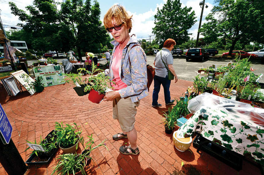 Hour photo / Erik Trautmann Mary Verel picks out a native species of Globe Thistle during the Norwalk Garden Club Plant Sale at 1 Park Saturday.