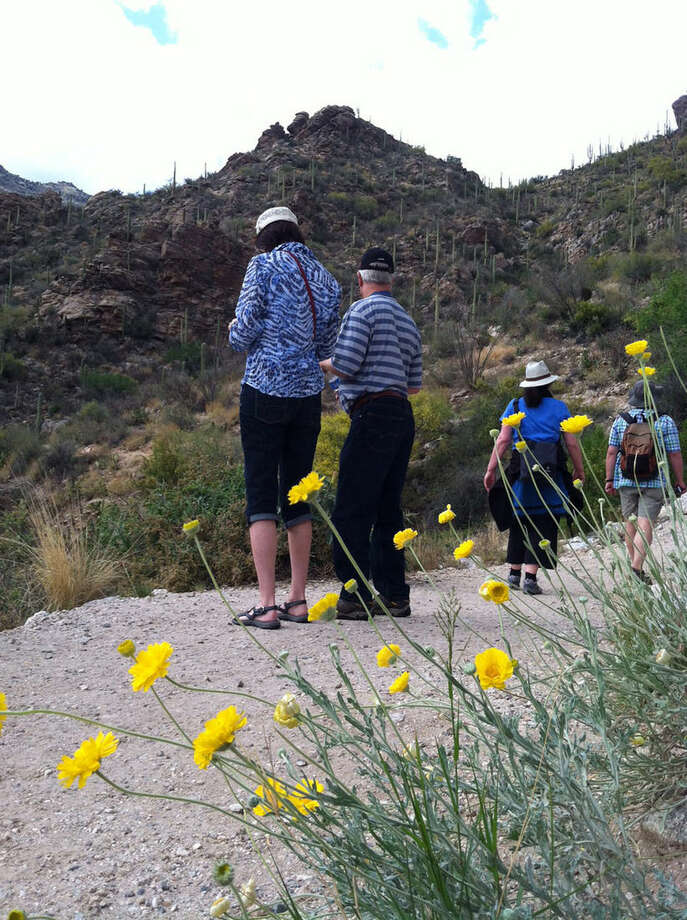This April 24, 2015 photo shows visitors at an overlook at a tram shuttle stop in Sabino Canyon Recreation Area, a park not far from downtown Tucson, Ariz. For visitors who are pressed for time, the park offers a quick, easy-to-access look at spectacular desert scenery with mountains all around in every season, just steps from the parking lot. For those with more time to visit, there's a tram tour and numerous hiking trails. (AP Photo/Beth J. Harpaz)