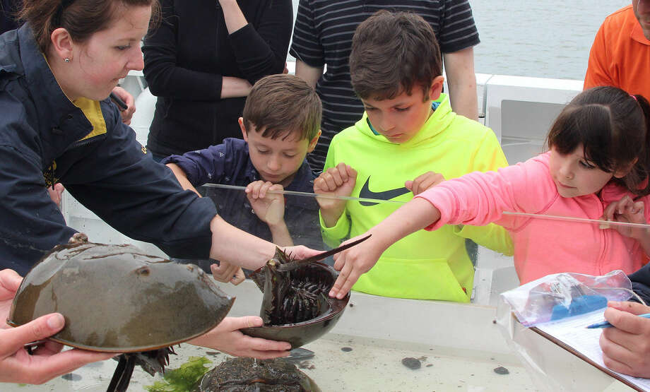 Hour photo/Chris Bosak Maritime Aquarium at Norwalk educator Lauren Magliola shows horseshoe crab to Joseph Gellentien, Sam Parsepe, and Chloe McKernan during a cruise aboard the Aquarium's new research vessel RV Spirit of the Sound on Saturday afternoon.