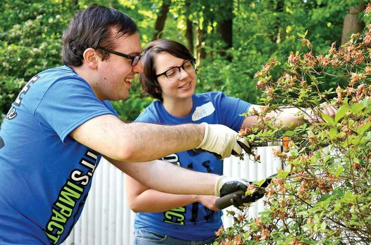 Hour photo / Liana Sonenclar Deloitte employees Andrew Brooks and Ania Kot trim bushes Friday as part of the 15th anniversary of IMPACT Day.