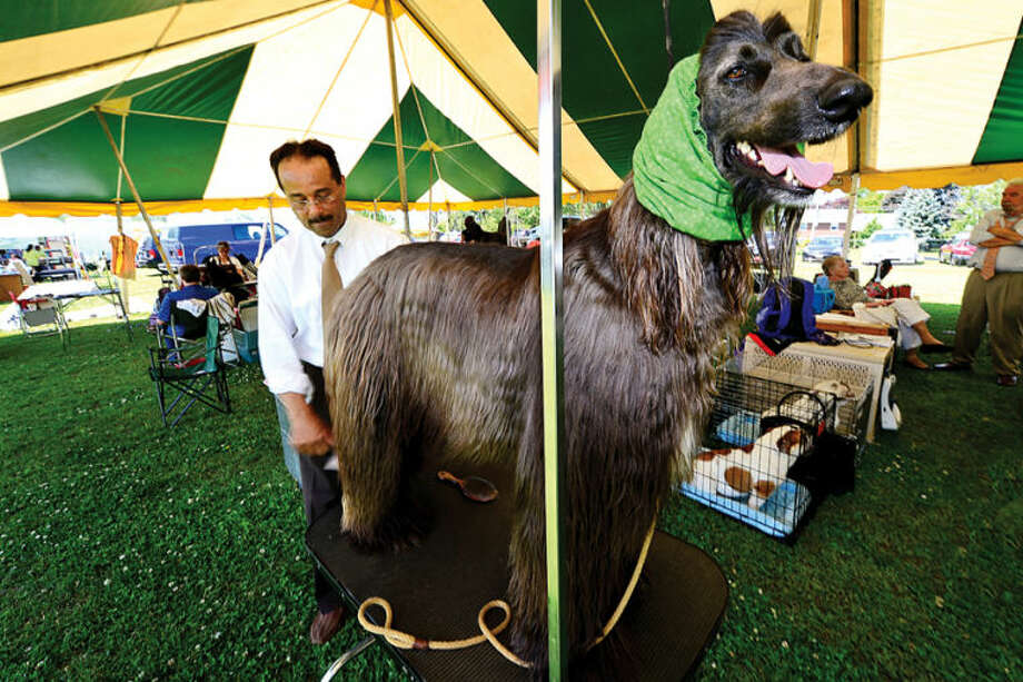 Hour photo / Erik Trautmann Ron Gatling grooms his Afghan Hound, Jason, during The Greenwich Kennel Club All-Breed Dog Show, Obedience & Rally Trial at Taylor Farm Saturday,
