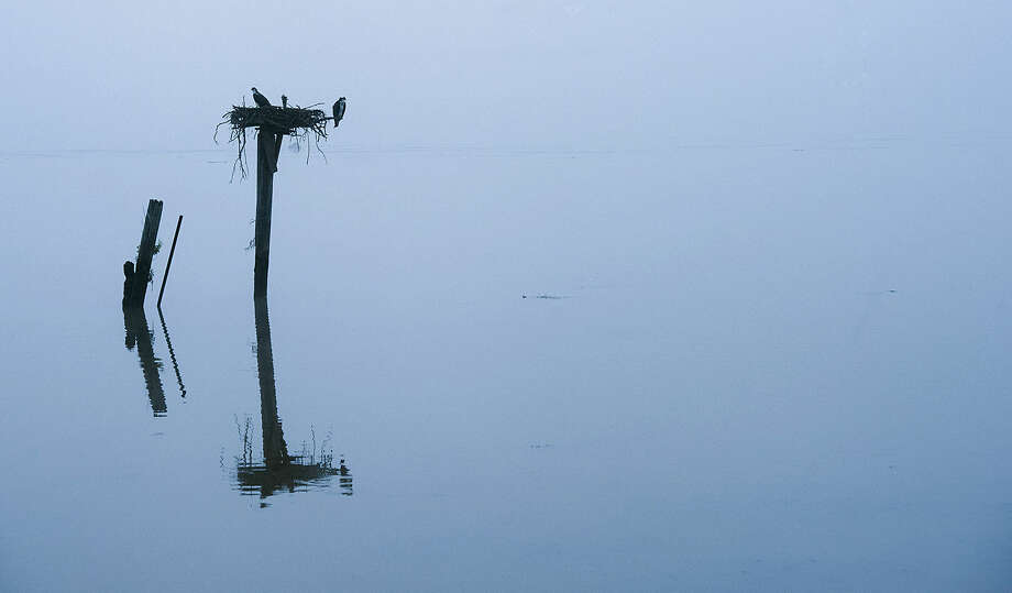 A pair of osprey sit in their nest in the early morning fog on the Potomac River, Friday July 3, 2015, in Alexandria, Va. (AP Photo/Cliff Owen)