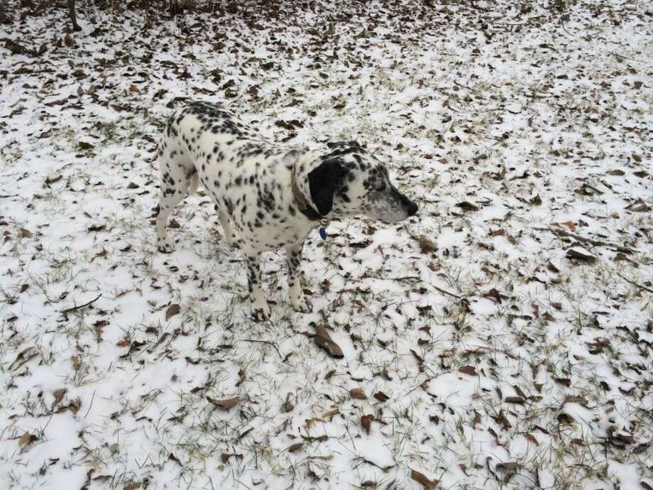 Former Ridgefield resident Jill Misner used her iPhone to snap this photograph of her then-7-year-old Dalmation-pointer mix, Wrigley, against a backdrop of ground lightly dappled with snow. The photo, taken earlier this year in Ridgefield, took third place in the 2014 iPhone Photography Awards.
