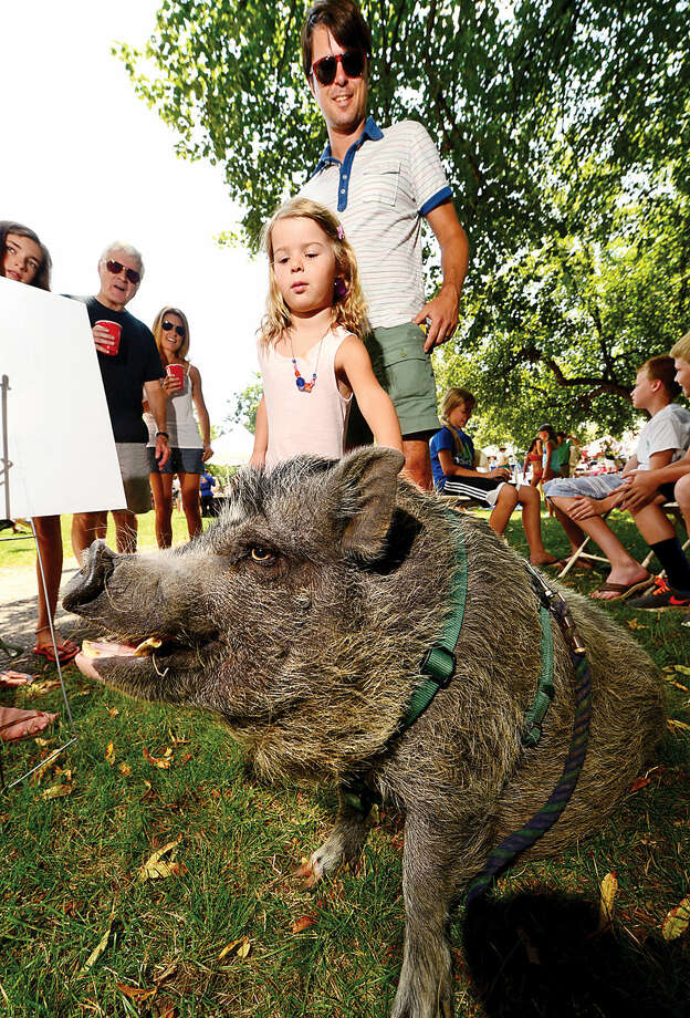 Hour photo / Erik Trautmann Quinn Alexis, 5, and her dad, Mike, visit with Earl the Pig from Pred Piper Pony Rides during the 45th annual Rowayton Civic Association River Ramble! at Pinkney Park Saturday.
