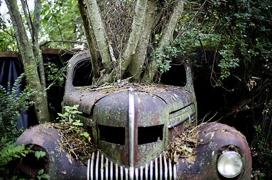 Trees grow through the windshield of a 1937 Chrysler Imperial as it sits at Old Car City, the world's largest known classic car junkyard Thursday, July 16, 2015, in White, Ga. Many of the cars have never moved in over 30 years and in some cases, trees now grow through them, even lifting some off the ground. (AP Photo/David Goldman)