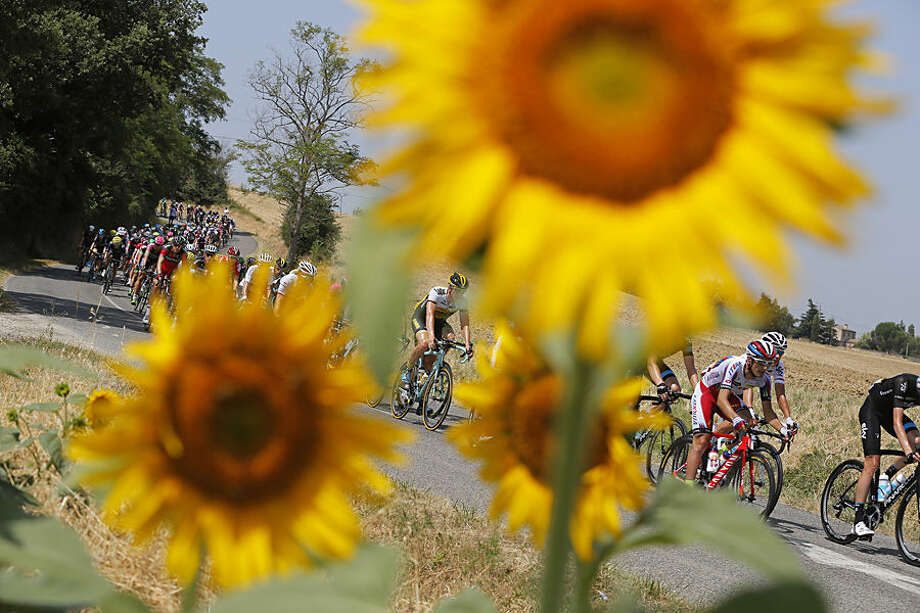 The pack passes a field of sunflowers during the thirteenth stage of the Tour de France cycling race over 198.5 kilometers (123.3 miles) with start in Muret and finish in Rodez, France, Friday, July 17, 2015. (AP Photo/Christophe Ena)