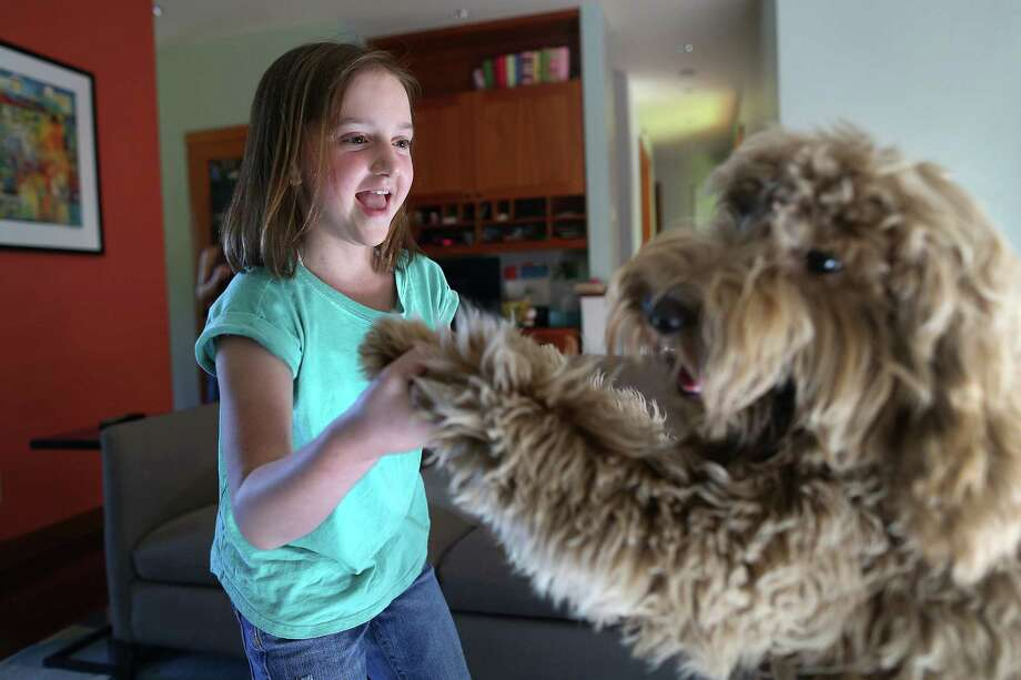The double-dose therapy used to treat 10-year-old Katie Belle, dancing with her dog, Penny, at her home in Seattle, is now the new standard for care for kids with neuroblastoma, a rare form of cancer.  Katie had her second stem cell transplant six years ago. Photo: Johnny Andrews, MBR / Seattle Times