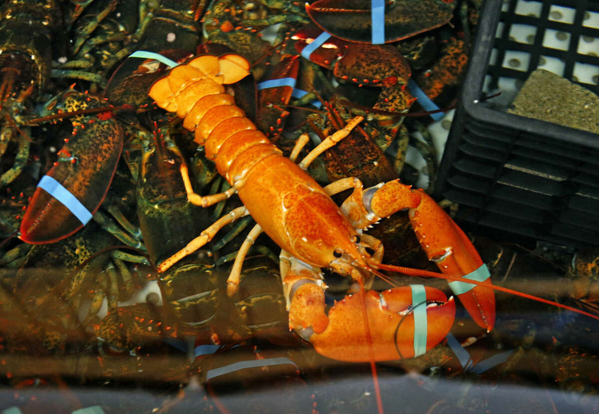 In hot water for lobster An intoxicated Florida woman yelled at a restaurant manager and stole a live lobster.News outlets report 42-year-old Kimberly Gabel was arrested in November 2018 and charged with disorderly intoxication and petit theft