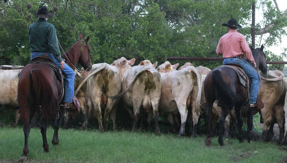 Unlike politicians, deficit spending is foreign language to a rancher. Don't have it? Don't spend it. Photo: JOHN DAVENPORT, STAFF / ©San Antonio Express-News/Photo may be sold to the public