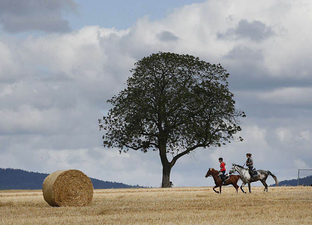 Two girls ride on their horses near Frankfurt, Germany, Tuesday, July 28, 2015. Weather forecasts predict changeable weather for Germany during the next few days. (AP Photo/Michael Probst)