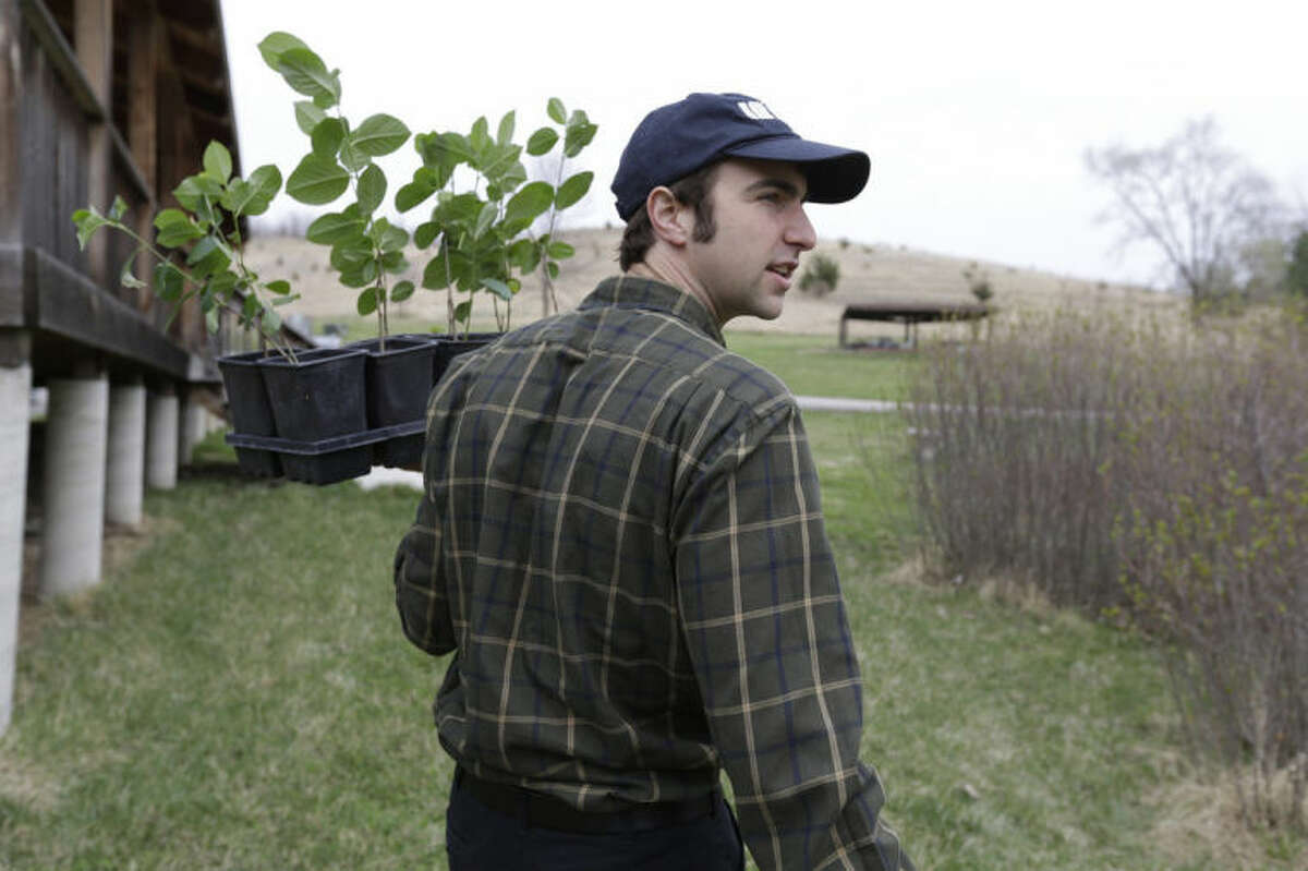 Andrew Pittz of the Sawmill Hollow aronia berry farm carries a tray of aronia berry seedlings in Missouri Valley, Iowa, Thursday, April 24, 2014. A few years ago, few people had ever heard of the Aronia berry, a pretty, but tart fruit. Now, the berry has set its sights on becoming the next