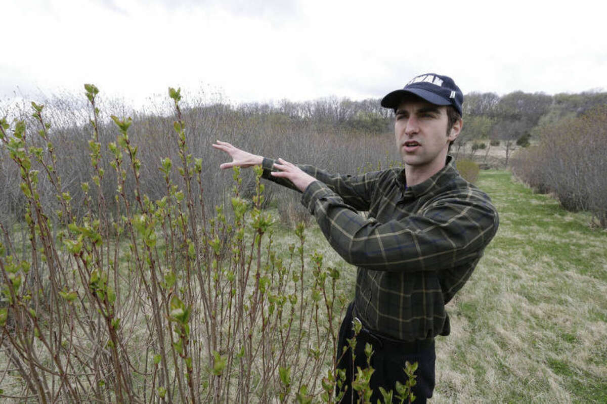 Andrew Pittz of the Sawmill Hollow aronia berry farm discusses farming of aronia berry plants in Missouri Valley, Iowa, Thursday, April 24, 2014. A few years ago, few people had ever heard of the Aronia berry, a pretty, but tart fruit. Now, the berry has set its sights on becoming the next