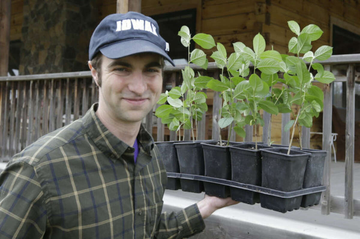 Andrew Pittz of the Sawmill Hollow aronia berry farm carries aronia berry seedlings in Missouri Valley, Iowa, Thursday, April 24, 2014. A few years ago, few people had ever heard of the Aronia berry, a pretty, but tart fruit. Now, the berry has set its sights on becoming the next