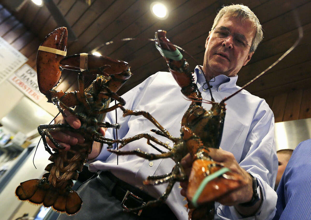 Republican presidential candidate, former Florida Gov. Jeb Bush, holds up two lobsters during a campaign stop at Brown's Lobster Pound in Seabrook, N.H., Friday, Aug. 7, 2015. (AP Photo/Charles Krupa)