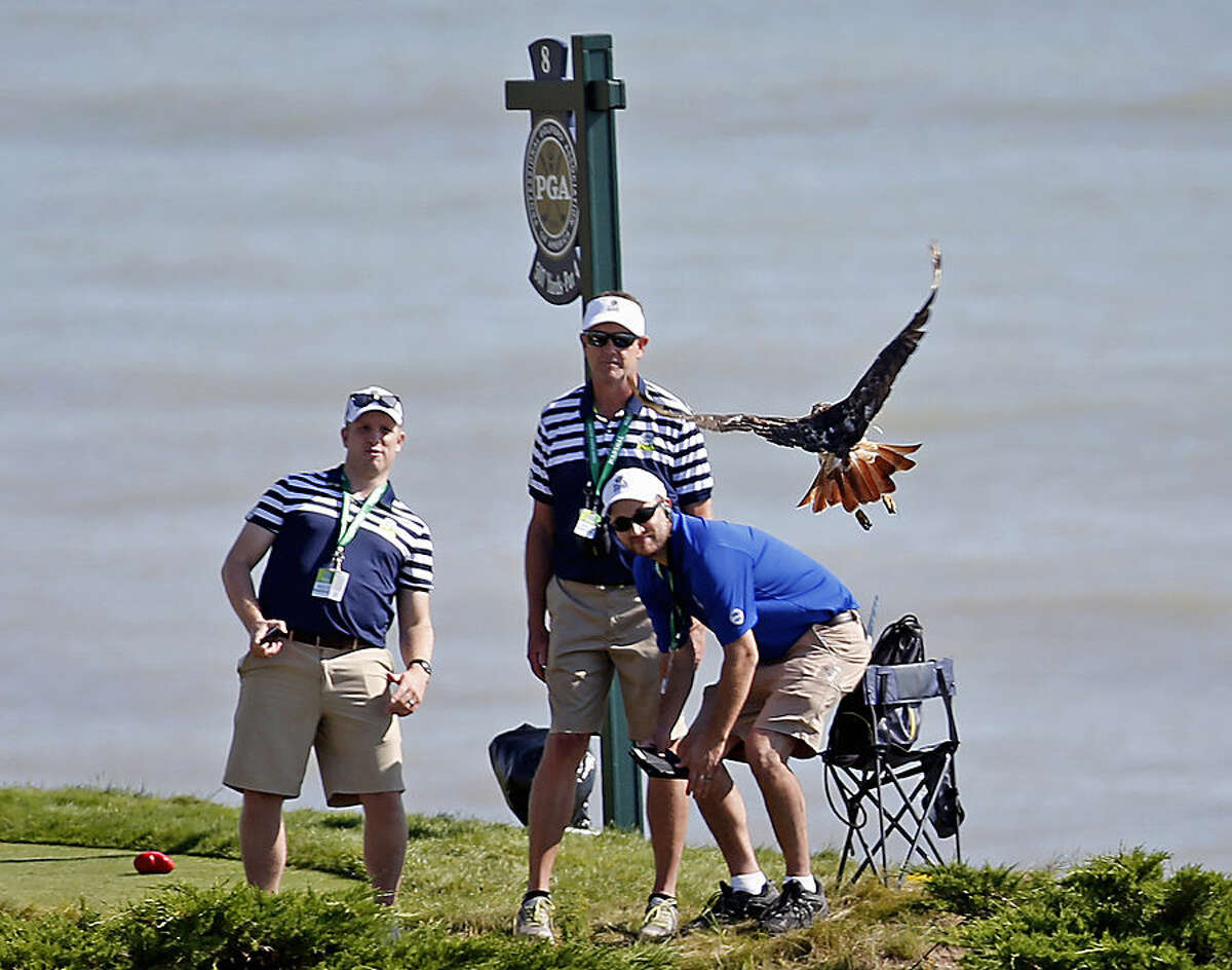 Marshals watch as a bird flies near the 8th tee during a practice round for the PGA Championship golf tournament Wednesday, Aug. 12, 2015, at Whistling Straits in Haven, Wis. (AP Photo/Julio Cortez)