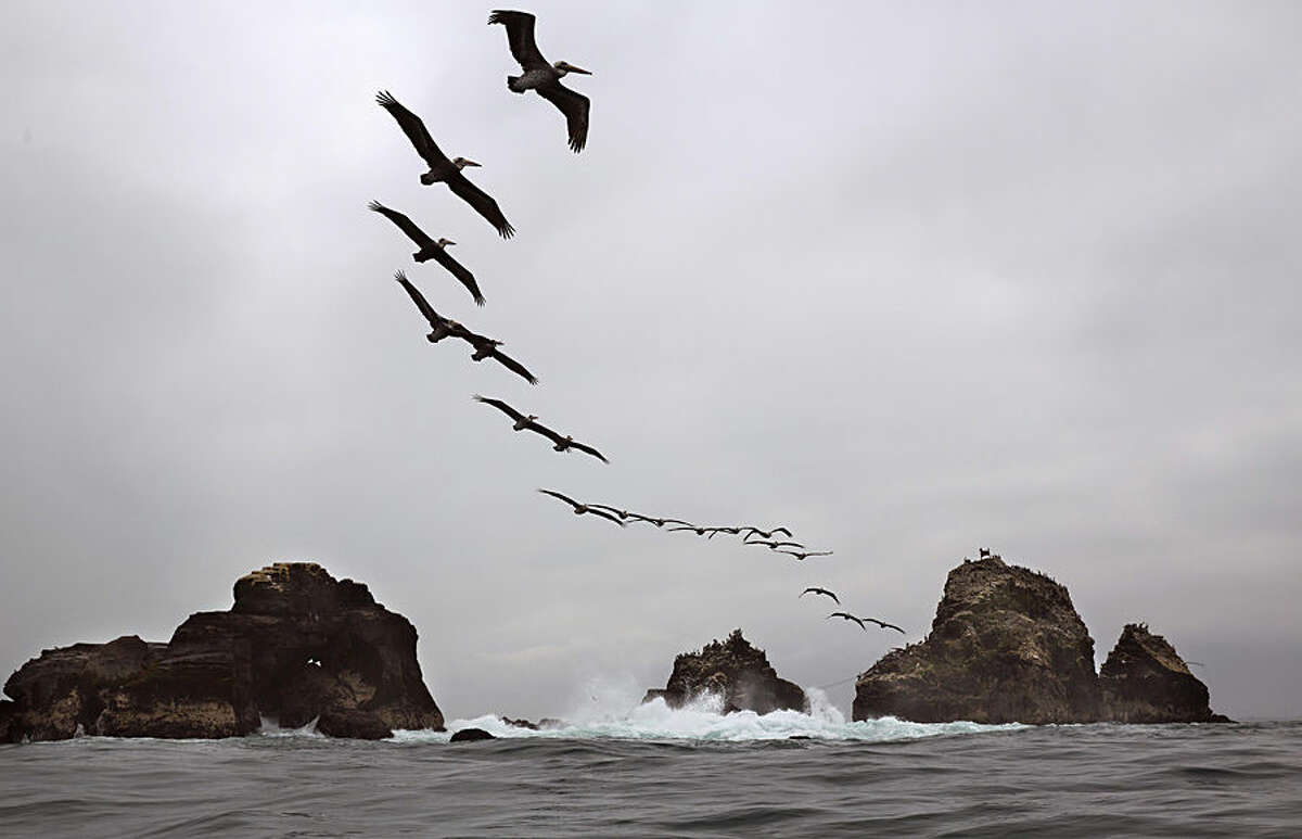 Pelicans fly over Oladal island in Lima, Peru, Tuesday, Aug.18, 2015. (AP Photo/Rodrigo Abd)