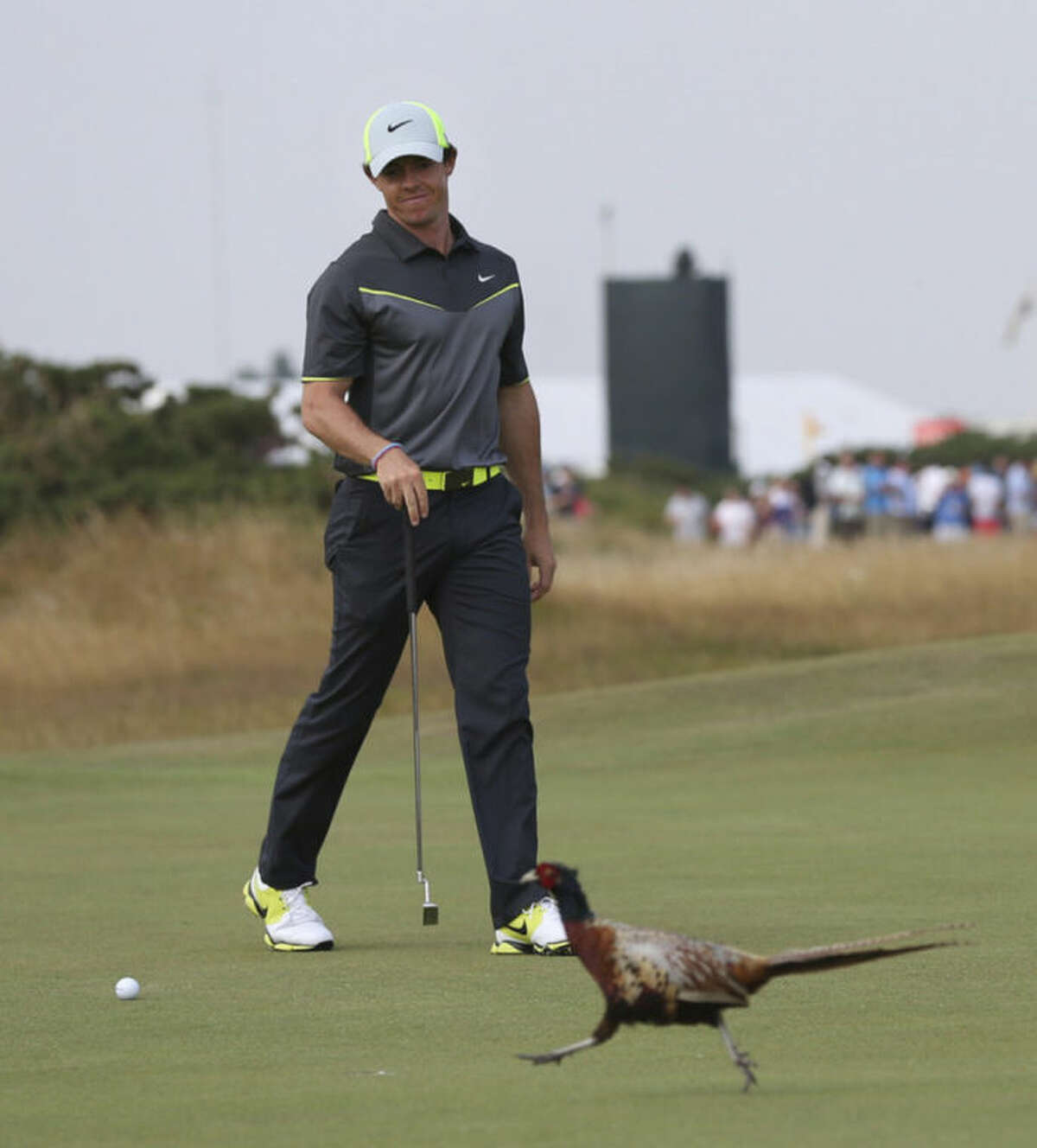 Rory McIlroy of Northern Ireland pauses play and watches a pheasant crossing the 8th green during the second day of the British Open Golf championship at the Royal Liverpool golf club, Hoylake, England, Friday July 18, 2014. (AP Photo/Scott Heppell)