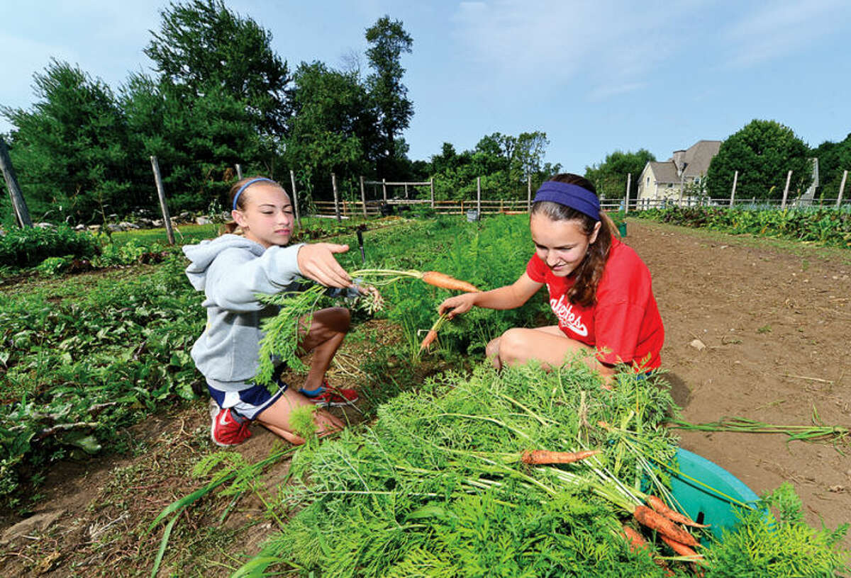 Maggie Coffin and Juliana Musilli pick carrots for a meal during the Ambler Farm Farm-to-Kitchen program Tuesday.