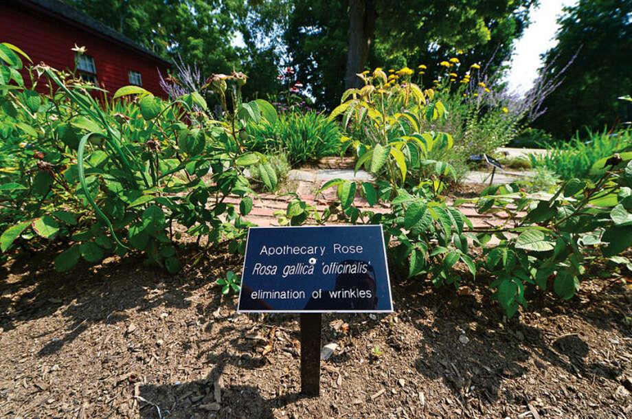 The Wilton Historical Society 1740 Colonial Herb Garden.