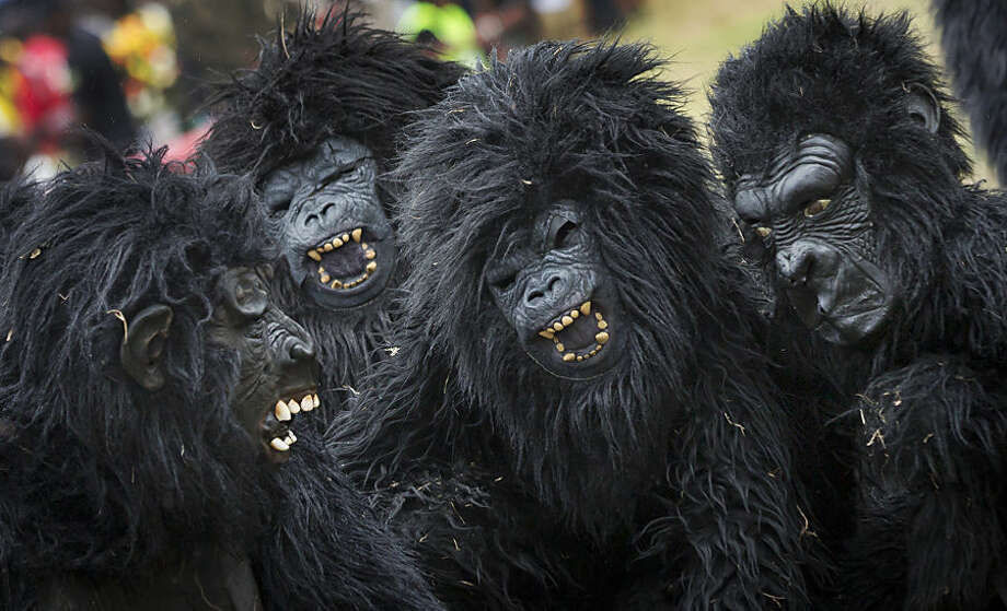Youths dressed in gorilla costumes to represent the newly-named gorillas, entertain the crowd by mimicking the animals' behaviour, at a baby gorilla naming ceremony in Kinigi, northern Rwanda Saturday, Sept. 5, 2015. Rwanda has named two dozen baby mountain gorillas in an annual naming ceremony that reflects the African country's efforts to protect the endangered animals, which attract large numbers of foreign tourists to the volcano-studded forests where they live. (AP Photo/Ben Curtis)