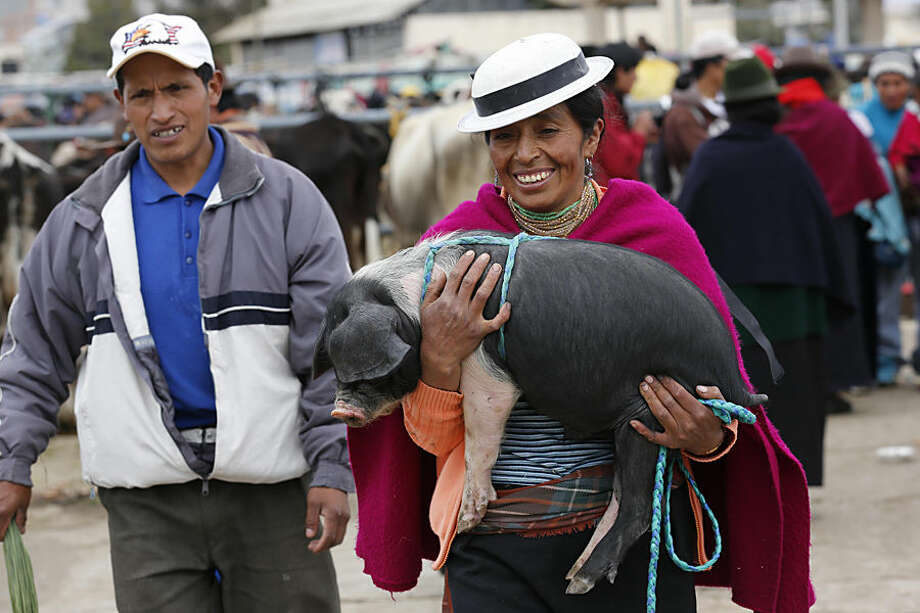 """In this Aug. 16, 2014, photo, a woman smiles while she carries a pig, which will be be fattened to be sold later, in Riobamba, Ecuador. Pork introduced by the Spaniards in colonial times has become an essential ingredient in the Ecuadorian cuisine. Slow roasted pork known as """"Hornado"""" is a national dish and the first competition to recognize the best """"Hornado"""" in the country took place on Sunday. (AP Photo/Dolores Ochoa)"""