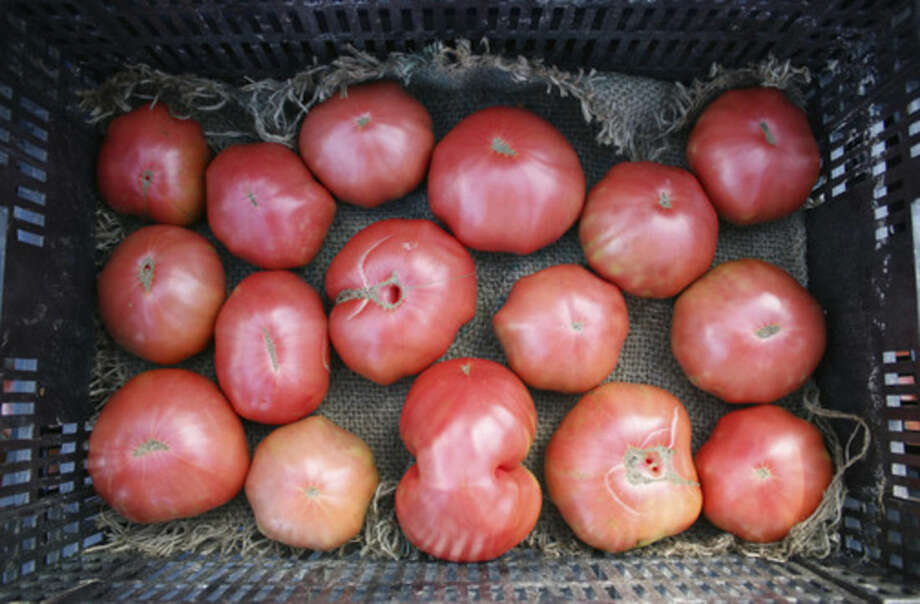 Photo by Frank WhitmanHeirloom tomatoes at Sweet Acre Farm in Lebanon, Conn.