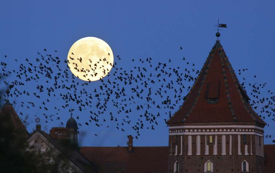 """A flock of birds fly by as perigee moon, also known as a super moon, rises above a medieval castle in Mir, Belarus, 95 kilometers (60 miles) west of capital Minsk, Belarus, late Sunday, Sept. 27, 2015. The full moon was seen prior to a phenomenon called a """"Super Moon"""" eclipse that will occur on Monday, Sept. 28. (AP Photo/Sergei Grits)"""