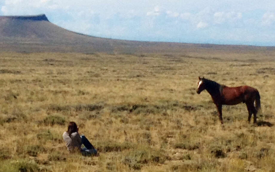 Contributed photoNicole Rivard of Friends of Animals photographing wild horses in Wyoming.
