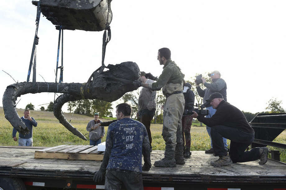 In this photo taken Thursday, Oct. 1, 2015, using straps and zip ties to help secure cracks in the tusks, the remains of a woolly mammoth are lifted out of the ground and placed on a trailer for transpor, as University of Michigan professor Dan Fisher and a team of Michigan students and volunteers work to excavate a woolly mammoth found on a farm near Chelsea, Mich. (Melanie Maxwell/The Ann Arbor News via AP) LOCAL TELEVISION OUT; LOCAL INTERNET OUT; MANDATORY CREDIT