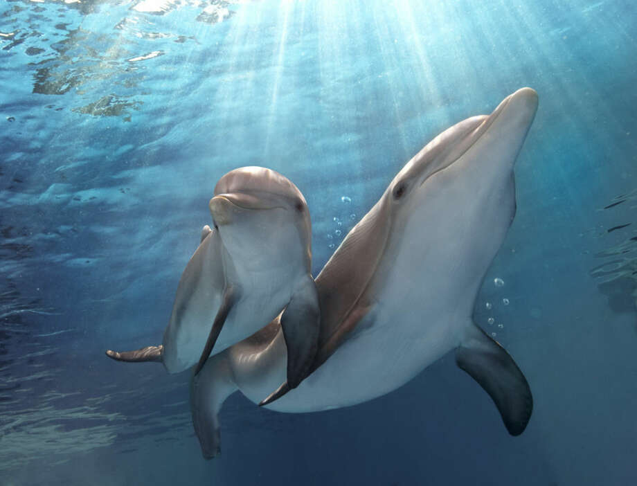 "This photo released by Warner Bros. Pictures shows a scene from the film, ""Dolphin Tale 2."" The film releases on Sept. 12, 2014. (AP Photo/Warner Bros. Pictures, Copyright Alcon Entertainment, LLC, Bob Talbot)"
