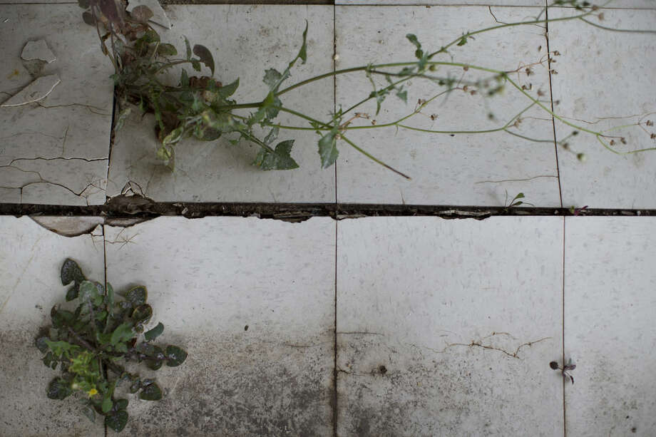 In this Sept. 5, 2014 photo, plants grow through tiles on a damaged floor as Gary Silberman guides reporters on a tour of his parent's home that was destroyed by Superstorm Sandy in Lindenhurst, N.Y. After receiving nearly $17,000 in assistance from FEMA, the agency is demanding a return on the funds. (AP Photo/John Minchillo)