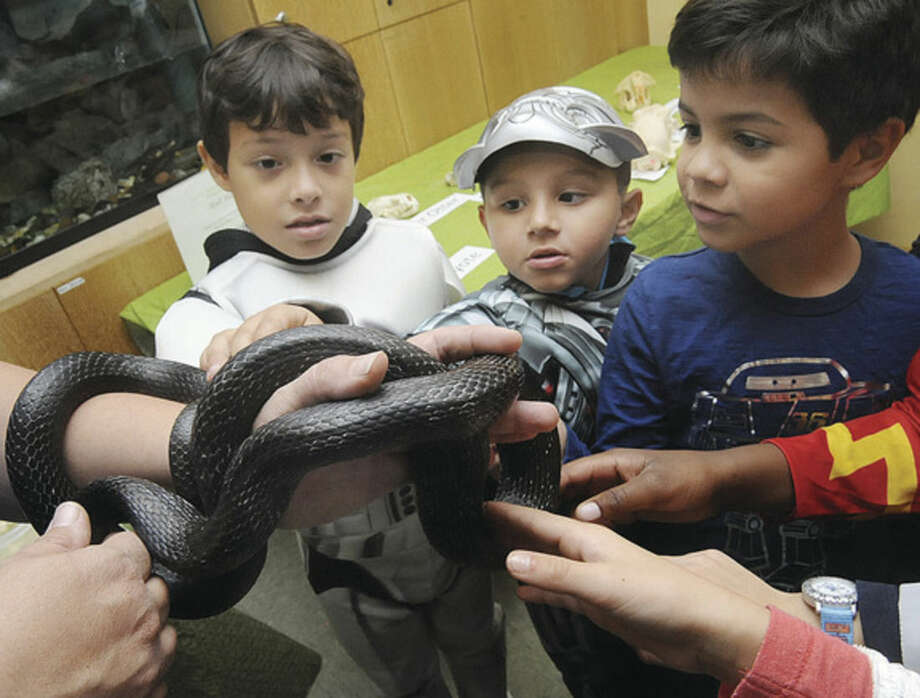 "Hour photo Matthew VinciTrick-or-Treaters from left: Eduardo Oliva, 7, Romeo Rivera, 5, and Lucas Ordonez, 7, meet an Eastern Rat Snake at the ""Ick Fest"" at the Stamford Museum and Nature Center on Sunday."