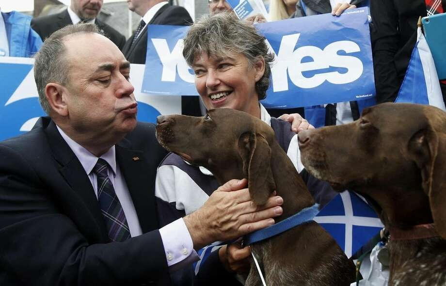 Scottish First Minister Alex Salmond reacts with two German short haired pointers and Yes supporters, in Turriff, Scotland, Thursday, Sept. 18, 2014. Polls opened across Scotland in a referendum that will decide whether the country leaves its 307-year-old union with England and becomes an independent state. (AP Photo/PA, Danny Lawson) UNITED KINGDOM OUT NO SALES NO ARCHIVE