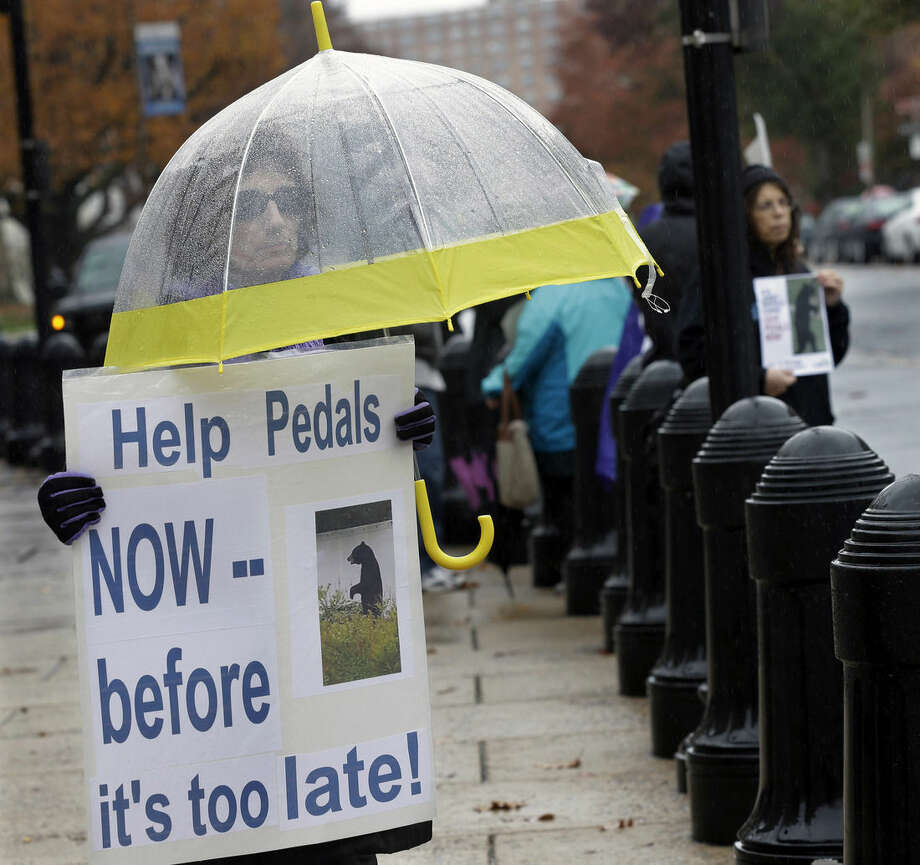 Janine Motta, of Manalapan, N.J., holds a sign as she stands in the rain as she and other animal activists renewed their calls for New Jersey officials to help ensure the welfare of a bear that walks upright and has become a social media darling Tuesday, Nov. 10, 2015, Trenton, N.J. (AP Photo/Mel Evans)