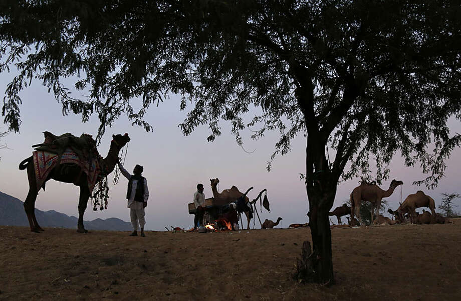 Indian camel herders stand among camels early morning during the annual cattle fair in Pushkar, in the western Indian state of Rajasthan, Tuesday, Nov. 17, 2015. Pushkar, located on the banks of Pushkar Lake, is a popular Hindu pilgrimage spot that is also frequented by foreign tourists who come to the town for the annual cattle fair and camel races. (AP Photo/Deepak Sharma)