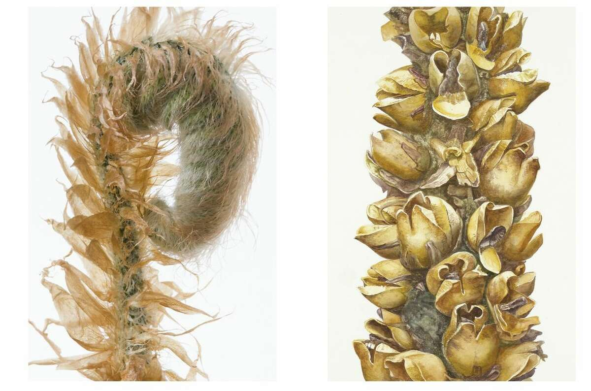 Celebrated botanical artist Dick Rauh and Wilton photographer Joyce Seymore share their passion for observing nature up close in