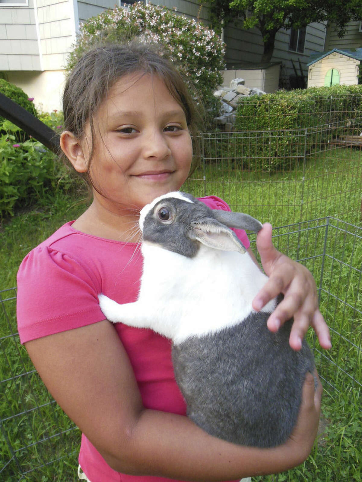 Contributed photo Nataly, of Manhattan, enjoyed an afternoon playing with a bunny in a neighbors backyard while visiting her Fresh Air host family. Nataly spent two weeks with Margaret Pappas and Charles Stuttig, of Greenwich, this past July as part of The Fresh Air Fund's Volunteer Host Family Program.