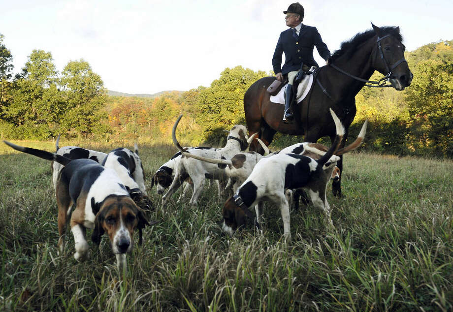In this Wednesday, Oct. 8, 2014 photo, hunt master William T. Stuart, from Fairfield County Hounds, collects the hounds for a hunt, in Bridgewater, Conn. At the last fox-hunting club in the state, it's been three years since the last fox sighting and coyotes have become the hunters' new quarry. Coyotes run fast and in rugged terrain they are nearly impossible to catch. None were caught this day. (AP Photo/Jessica Hill)