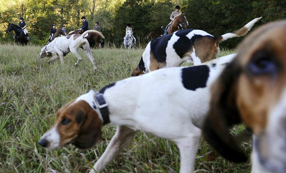 In this Wednesday, Oct. 8, 2014 photo, riders from Fairfield County Hounds and dogs assemble for a hunt in Bridgewater, Conn. At the last fox-hunting club in the state, it's been three years since the last fox sighting and coyotes have become the hunters' new quarry. Coyotes run fast and in rugged terrain they are nearly impossible to catch. None were caught this day. (AP Photo/Jessica Hill)