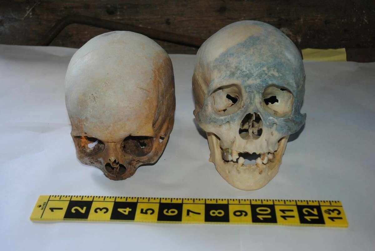 Contributed photo Stamford Police released this image of two human skulls discovered Thursday.
