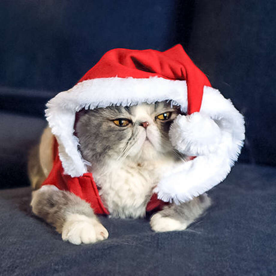 Festive Feline Fun for the Holidays