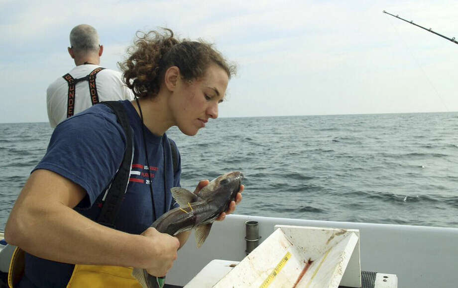 In this July 9, 2015, photo, provided by the New England Aquarium, aquarium research technician Emily Jones evaluates the condition of a haddock as part of a study about the mortality of discarded fish, on Jeffreys Ledge off the coast of New Hampshire. Scientists are working with New England fishermen to determine the percentage of fish such as haddock, cod and cusk that survive after they are tossed overboard. (Emily Bauernfeind/New England Aquarium via AP)